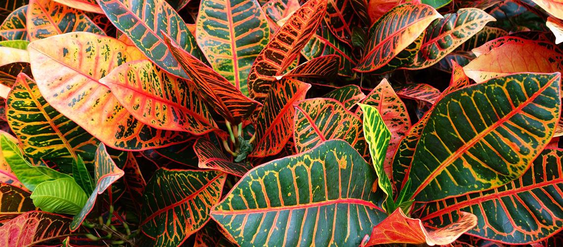 5 idee per decorare casa in autunno for Piante colorate da esterno